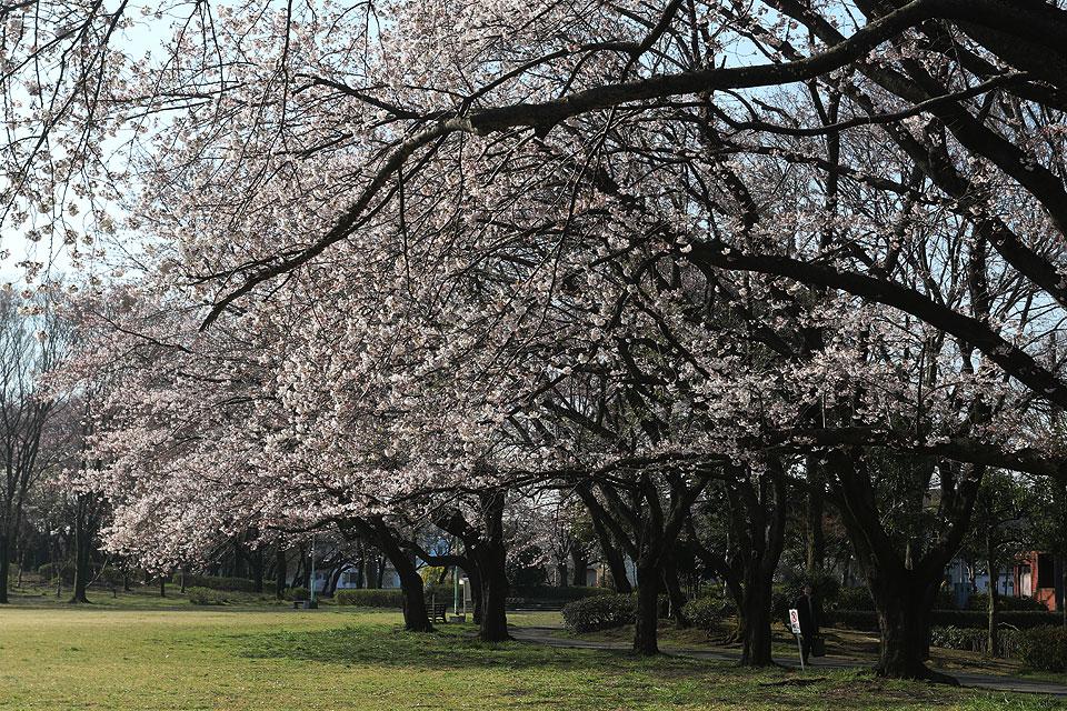 花崎北公園